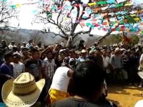 PELEA DE TIGRES EN ACATLAN, GRO. 02/05/13