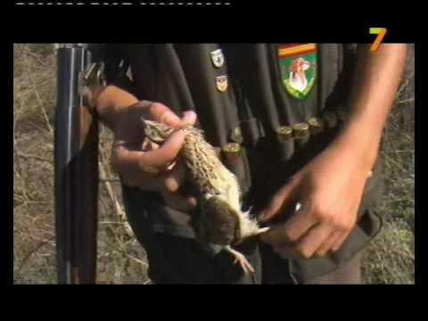 Caza menor en campo arañuelo_COTO ABIERTO 17-oct-09 2ª parte.wmv