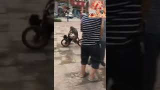 Monkey And Dog Best Funny Video In World