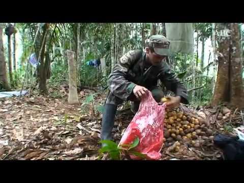 Pastor Alape, el nuevo jefe de las FARC