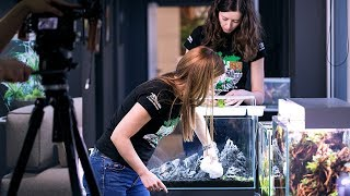 HOW TO BUILD A SMALL PLANTED TANK - AQUAGIRLS ROCK!