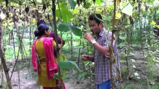 Bangla garden