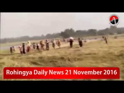 Rohingya Daily News 21 November 2016