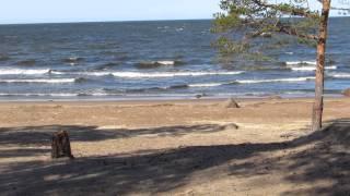 Пляж Липово - отзыв о Сосновый Бор, Сосновый Бор, Россия 35