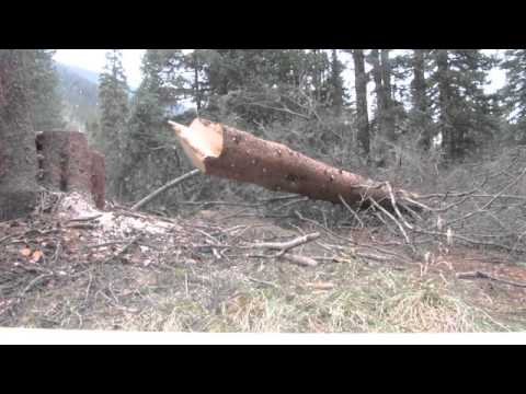 Stihl 461 chainsaw felling bucking timber firewood silverton colorado