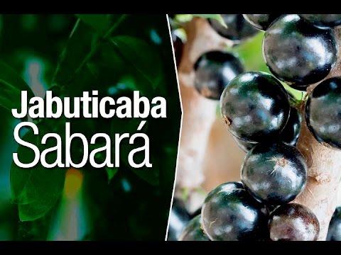 Jabuticaba: Diferença entre Jabuticaba Sabará, Olho de Boi e Jabuticaba Híbrida