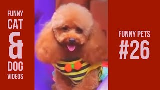 Funny Cats and Dogs Compiation 26 | Vines 2018