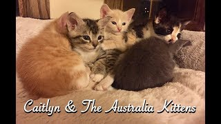 Alley to Attic Bed & Breakfast Presents: Caitlyn & The Australia Kittens