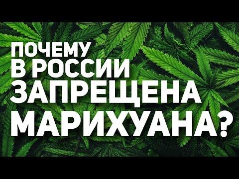 Почему Марихуана запрещена в России?