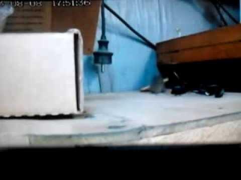 Мышонок---Акробат