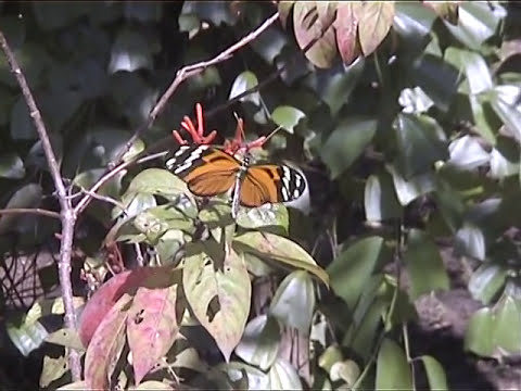 Flora and fauna of Costa Rica, Nicaragua and Panama. Part 2.