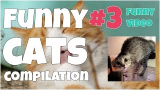 Funny cats compilation #3 🔸 7 second of happiness FUNNY Video 😂