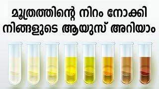 മൂത്രത്തിന്റെ നിറം പറയും നിങ്ങളുടെ ആയുസ് | Health Tips In Malayalam | Healthy Kerala