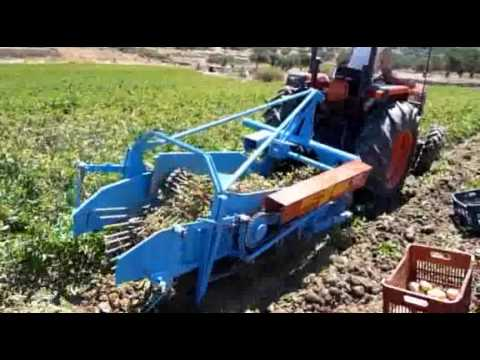 HARVEST POTATOES IN KARPATHOS 2010