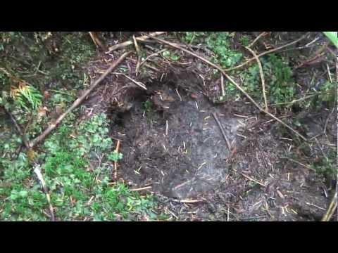Book Trailer: Great Bear Rainforest (COMING SOON!)