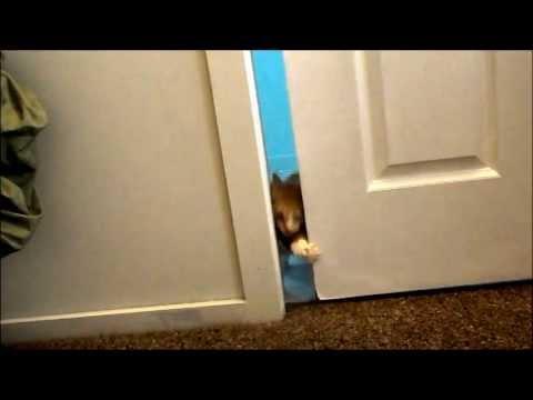 Strong Cat opening sliding door