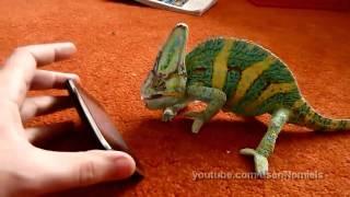 Camaleón asustado de un iPhone