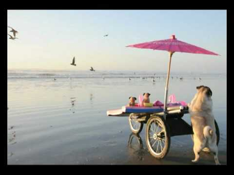 Beach Fun - Jenny The Pug with her Beach Stroller Video