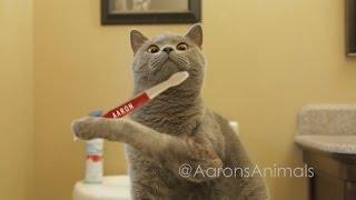 Aaron's Animals Funny Prince Michael Vines || FunnyVines