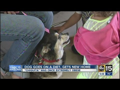 Overweight dog loses weights and finds his 'furever' home