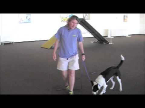 Villa La PAWs - Teaching Two Ball Retrieve