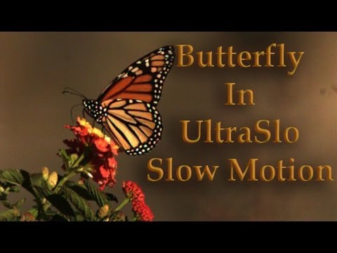 Butterfly Flying in Slow Motion
