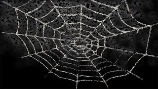Free footage for Halloween  Spider's web explosion