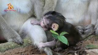 Brinn Give Everything To Bree - Milk Is Healthy Food Best For Mom To Feeding Lovely Baby