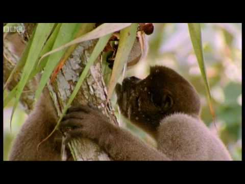Drinking monkeys & bathing birds - Wild South America - BBC Earth