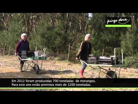 Visita ao produtor de Morangos Pingo Doce