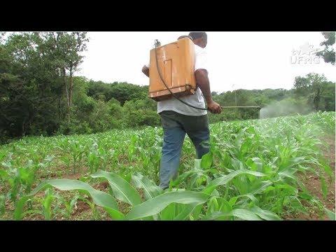 Pesquisadores da UFMG abordam malefícios dos agrotóxicos thumbnail