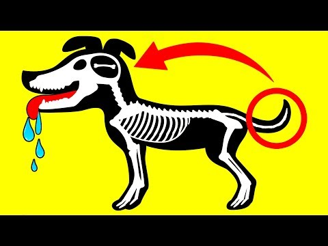 Understand Your Dog Better: 10 Dog Behaviors Explained