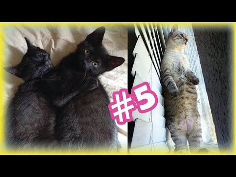 Cute and Funny Cat Videos Compilation | Beautiful Cats and Cute kittens | #5