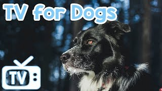 Dog TV New 2018! The Best Squirrel and Bird Footage with Music for Dogs to Watch and Relax to!