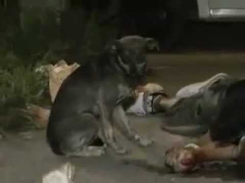 Kasihnya binatang ini kepada tuannya...=(