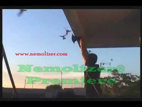 Nemolizer Premiere, Suara Walet Swiftlet Sound video