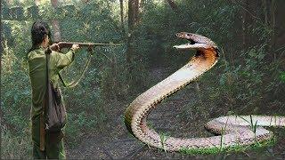 Rắn tu luyện thành tinh trên núi Cấm: {Kỳ 4} Giáp mặt rắn hổ mây khổng lồ ở Thất Sơn