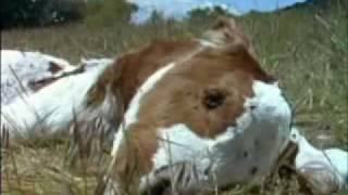 Animal Planet al Extremo - Glotones 5-5.flv