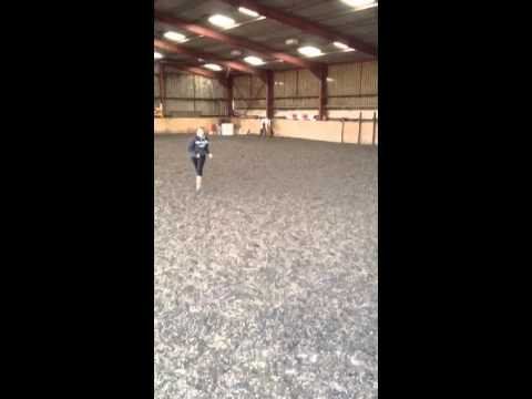 Chased by horse