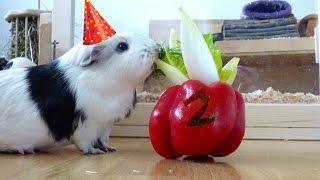 A  Special Guinea Pig Birthday