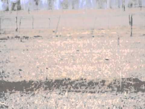 caceria de liebres con galgos carcaraña Parte 1