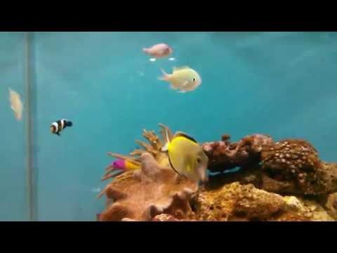 Nexus 4 sample video - Marine Aquarium in Bangladesh