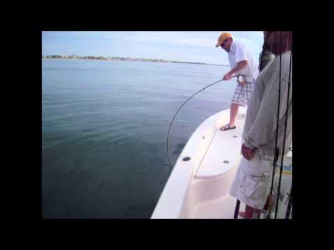 Fly Fishing for Sharks Wrightsville Beach Fishing Report