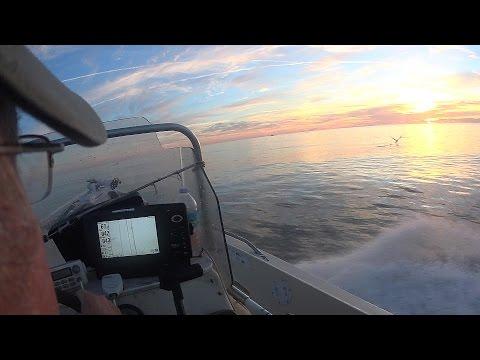 Limit Black Sea Bass
