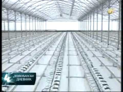 Savremene tehnologije u proizvodnji paradajza