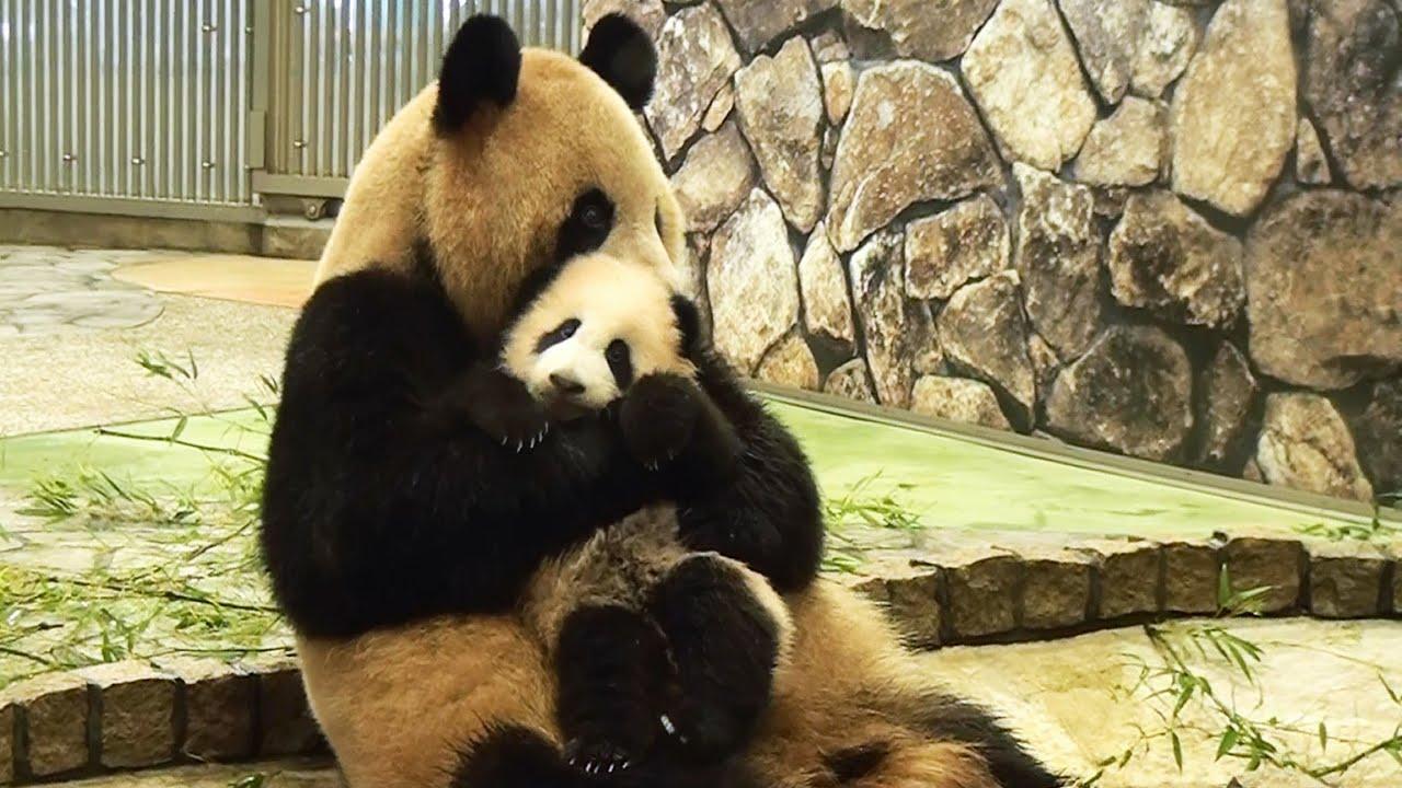 Фото панды с ребенком