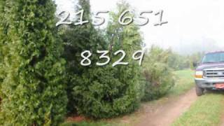 VVV XXX AAA Video.... Selling My 4 ft Evergreens  In Bucks County