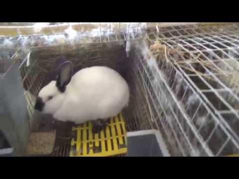 Немного о кроликах