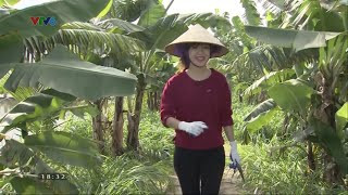 Thái Bình: Triệu phú ở tuổi 23 với 900 triệu/năm