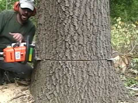 Cut Down A Tree video